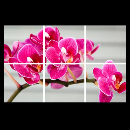 Led Wolkenplafond 6-orichidee - 5249-sll-wolk-6-orchidee