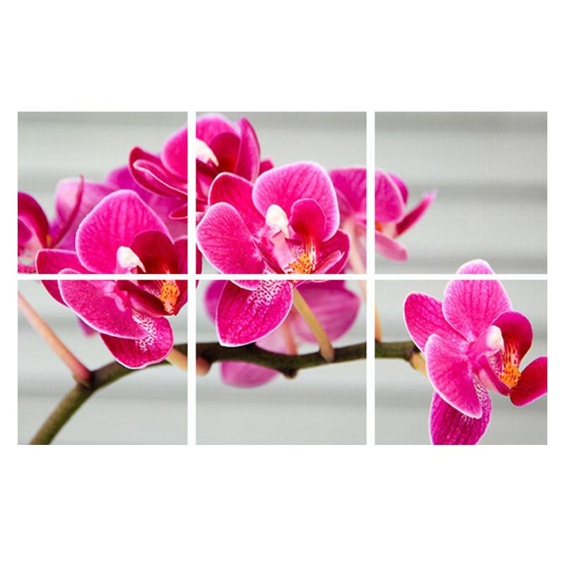 5249-sll-wolk-6-orchidee